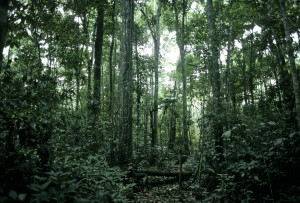 Forest cover in Acre Brazil