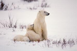 Climate Change 'shrinking' animals