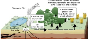 Schematic of the carbon capture and storage process