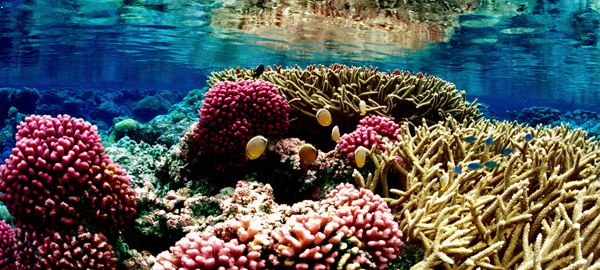 Oceans could be 150% more acidic by 2100