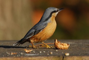 Tracking climate change impacts with the Big Garden Birdwatch