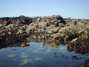 Harmful algae thriving in warm and windy Atlantic