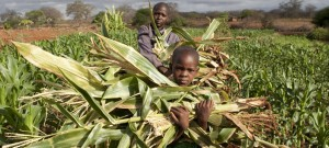 Kenyan farmers benefitting from latest climate science