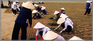 Photo of the week #11: Land management in Vietnam