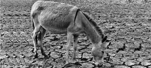 RTCC Q+A: Desertification