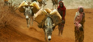 Bonn 2012: UNCCD calls for agriculture to be central to Rio+20