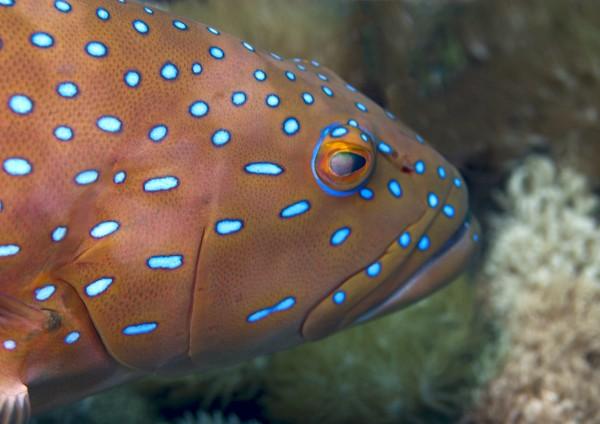Marine reserves in Australia help sustain fisheries