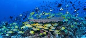 'Ocean of Life': Ocean biodiversity suffering at hands of alien invaders