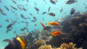 Ocean warming a largely man-made phenomena, say researchers