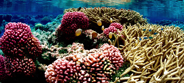 Cook Islands' fisheries at risk from ocean acidification
