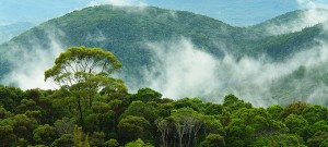 The role of forests in combating climate change
