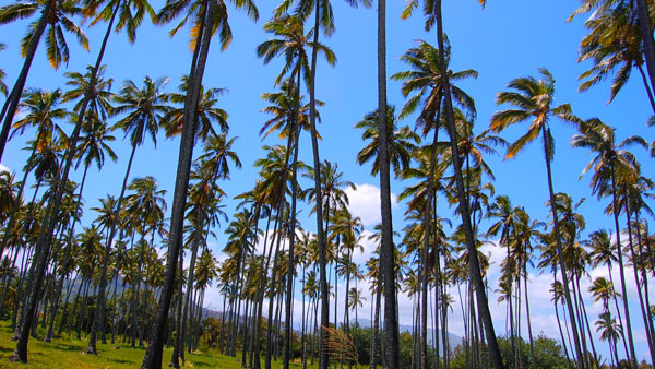 Hawaii's Green Blue economy tackles climate change challenges head-on