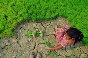 planting grasses (Source: CIAT International Center for Tropical Agriculture)
