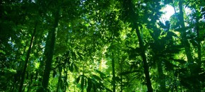 Conservation or carbon sinks: Can the UN see the forest for the trees?