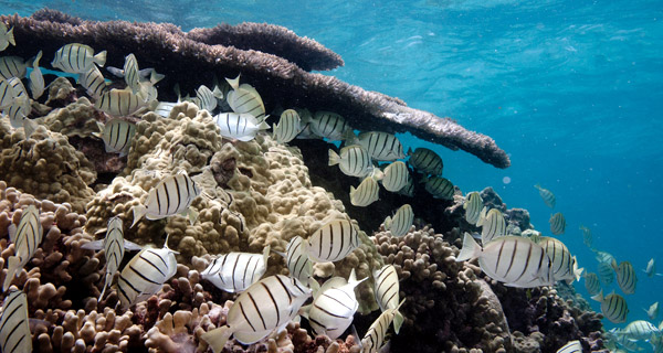 Climate change will make fish smaller, warns report