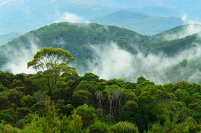Amazon deforestation halted through local action