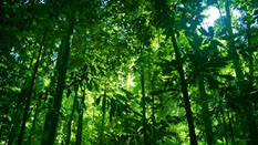 "REDD+ should value forests as more than ""carbon warehouses"""