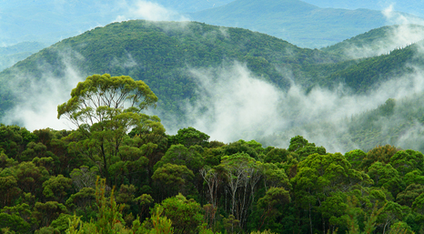 UN efforts to protect rainforests have been slow to deliver results