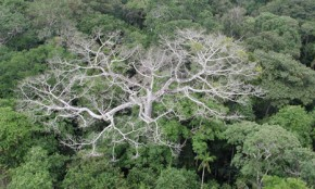 Climate change hurting Amazon rainforest warns Nasa