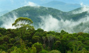 Forests hold key to feeding Earth's growing population
