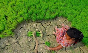 """India targets """"drought proof"""" status to sidestep climate threat"""
