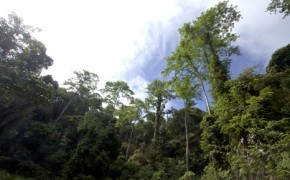 $29 billion needed by 2020 to save world's rainforests