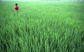 South East Asia food basket facing 'shocking' future
