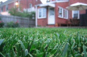 Dig up your lawn & live somewhere hot to cut emissions