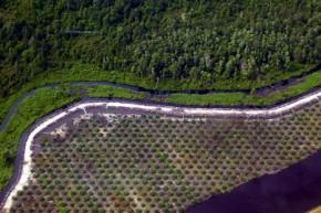 Climate change affecting global vegetation more than humans
