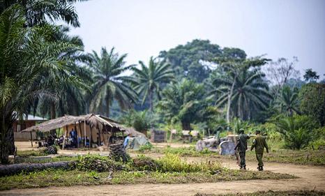 Crime and corruption threaten Congo rainforest