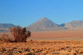 Desert offers clue to species' climate survival