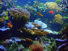 Coral reefs can survive ocean acidity - report