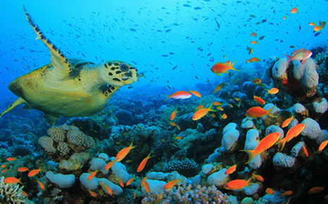 Corals can take decades to recover from climate impacts - report