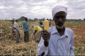 Africa needs GM crops to cope with climate change - expert