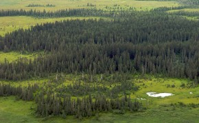 Alaska forest fires 'worst for 10,000 years'