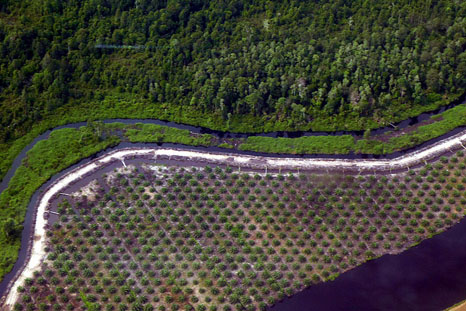 80% of Malaysian Borneo's rainforests destroyed by logging