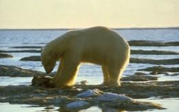 Loss of algae and plankton threatens Arctic food chain