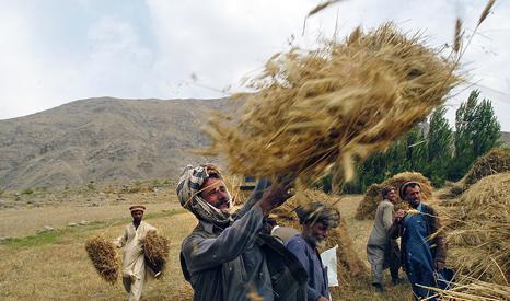 Farmers harvesting in Badakhshan province, Afghanistan (Pic: UN Photos/WFP)