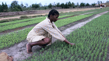 A woman plants crops in Madagascar (Source: World Bank Photo Collection)