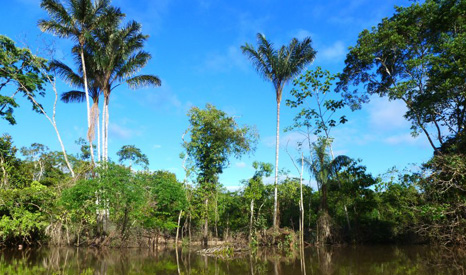 Protecting the Amazon is central to addressing climate change - around 15% of emissions come from deforestation (Pic: Global Water Forum)