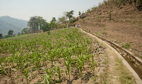 Kirtipur's concrete irrigation canal – the maize on the left will be harvested in June before the monsoons (Pic: Brandon Wu)