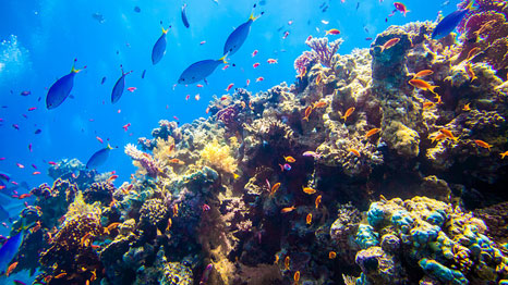 Tropical coral reefs support some 400 million livelihoods (Pic: Andrew K/Flickr)