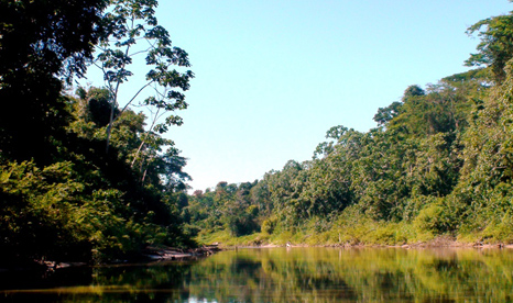 Huge swathes of the Amazon are under threat from logging and mining operations (Pic: Fabiola Ortiz)