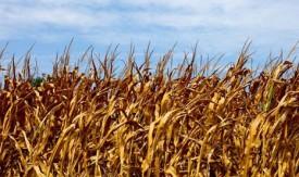 Scientists say can predict crop impacts of El Nino, La Nina