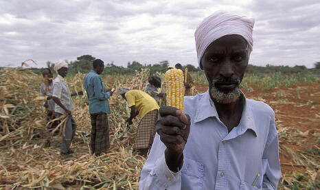 Corn farmers in Kenya are coming under increasing stress from erratic weather patterns (Pic: World Bank)