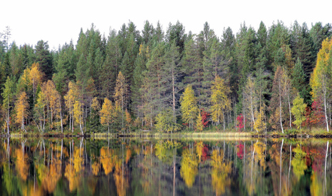 Finland has around 1,300 million tonnes of carbon sequestered in forests (Pic: Heather Sunderland/Flickr)