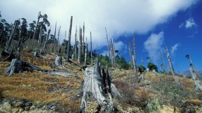 Indonesia deforestation now 'worse than Brazil'