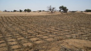 Fighting desertification will reduce the costs of climate change