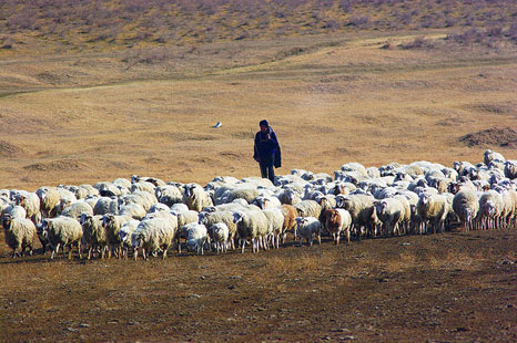 Sheep grazing is increasingly responsible for land degradation and desertification in the protected land of Vashlovani national park in Georgia. (Pic: United Nations Development Programme in Europe and CIS)