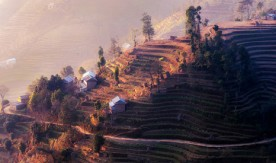 Climate resilient seeds offer hope to Nepal's farmers